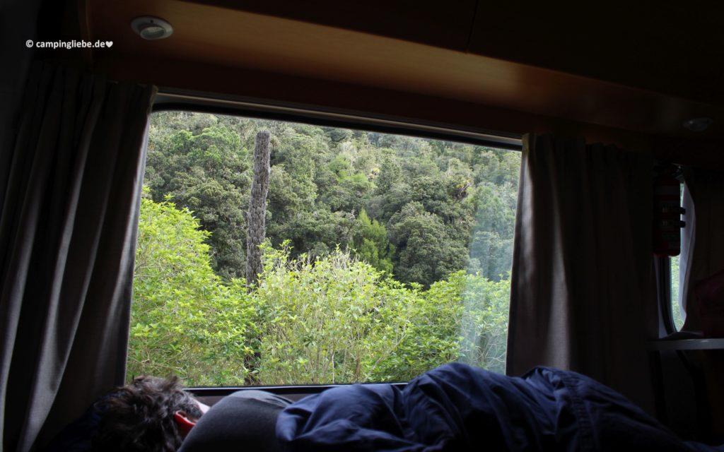 Im Wohnmobil in Neuseeland im Dschungel